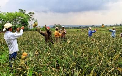 Empresas costarricenses, ejemplo de buenas prácticas con trabajadores migrantes