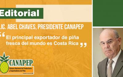 La industria de la piña: motor económico y social de Costa Rica