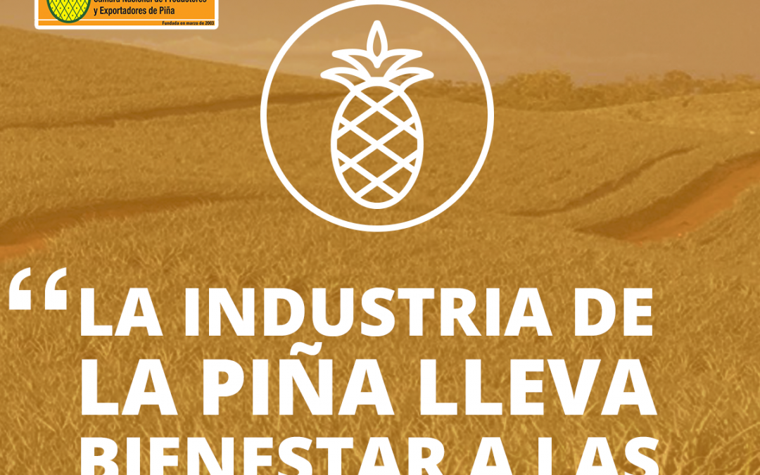 Agroindustria de la piña aumenta Índice de Desarrollo Humano